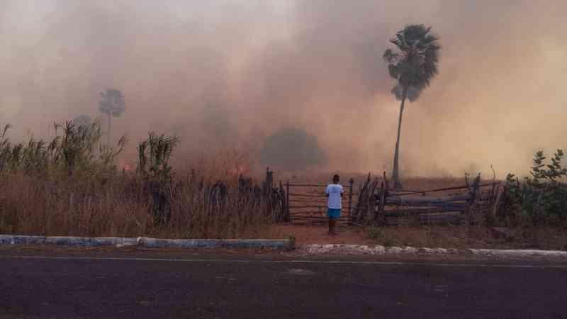 Incêndio atinge plantações e mata animais em Santa Cruz do Piauí