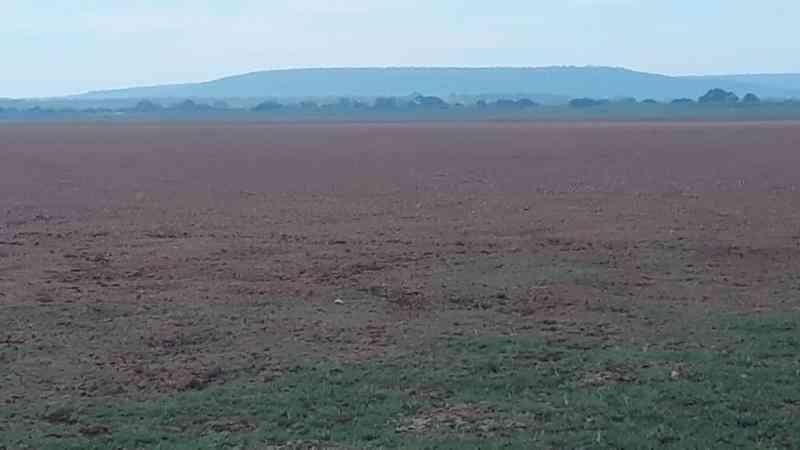 Lagoa de Parnaguá (PI) seca e morrem mais de um milhão de peixes