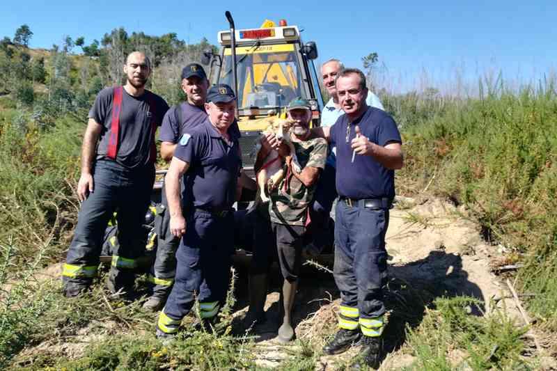 Cadela resgatada de poço com 20 metros de profundidade em Braga, Portugal