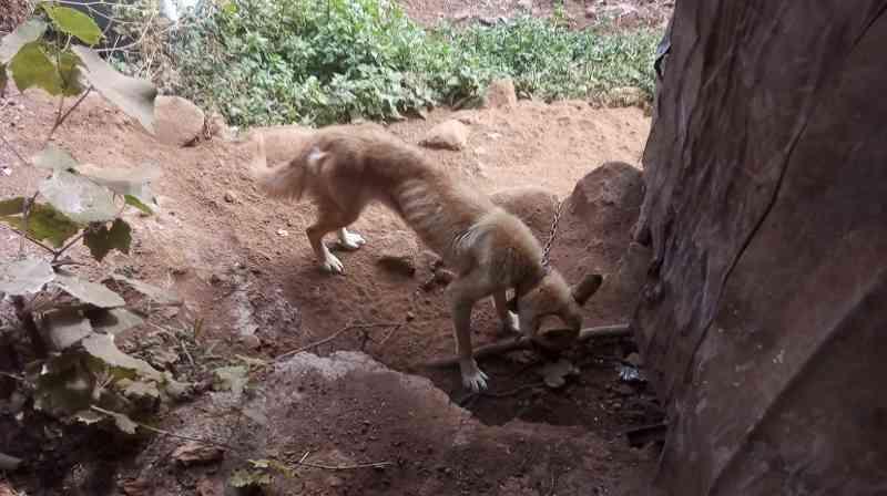 Portugal: cão esfomeado recebe alimento nos Canhas e vídeo 'emociona' internet