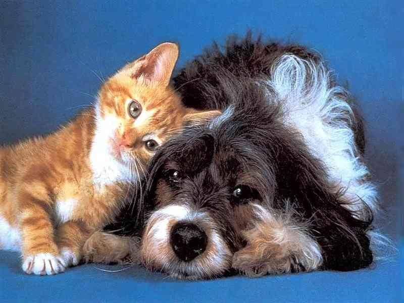 Campanha de esterilização de cães e gatos decorre até novembro em Chamusca, Portugal