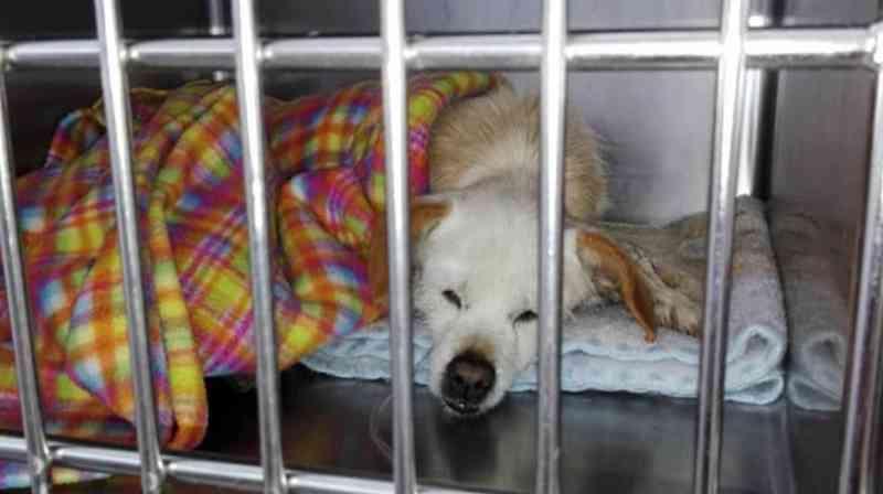 Portugal: Cães envenenados em São Roque lutam pela vida