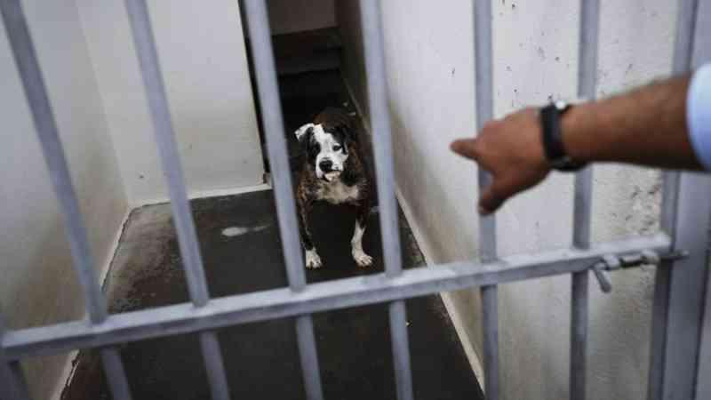 Portugal: Verbas para adaptar canis à lei que proíbe abate de animais são 'ridículas'