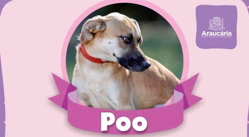 Prefeitura de Araucária (PR) lança campanha no Facebook para adoção de cães