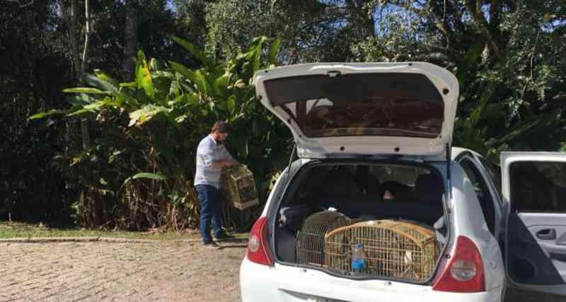 50 pássaros nativos silvestres vítimas do tráfico retornam à natureza no PR