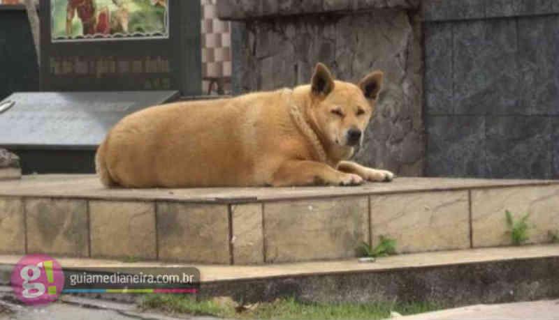 Cadela passa a morar no Cemitério Central de Cascavel (PR) após morte do tutor