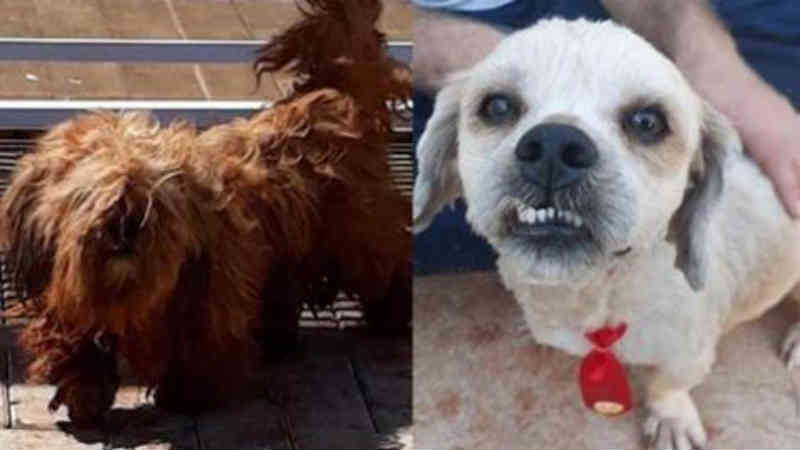 Cão é encontrado na região norte de Cascavel (PR); internauta promoveu banho e tosa do animal