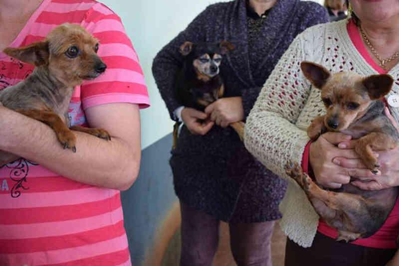 Prefeitura de Foz do Iguaçu (PR) fará levantamento populacional de cães de rua