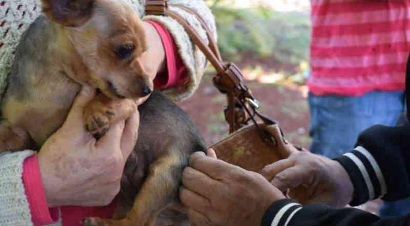 CCZ de Foz do Iguaçu (PR) vacina cães e gatos contra raiva; 600 animais já foram imunizados