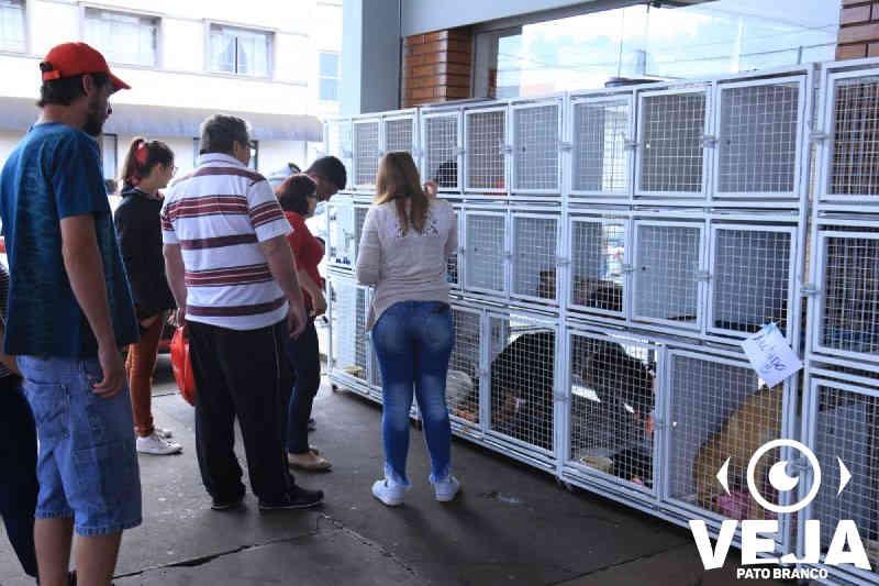 Mais de mil animais foram adotados nas feiras realizadas pela Prefeitura de Pato Branco, PR
