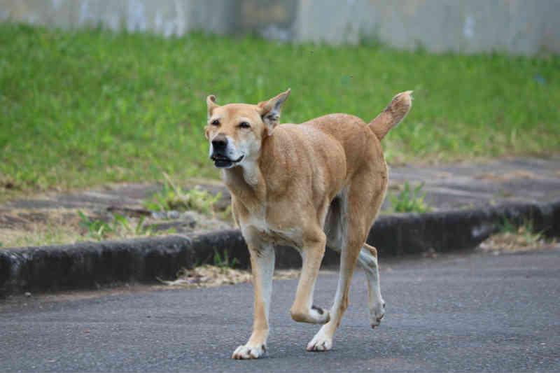 Ponte Grossa (PR) pode endurecer punição contra quem maltrata animais