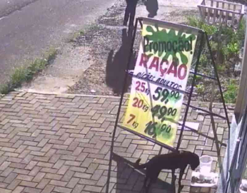 Cachorro é flagrado 'roubando' ração de pet shop para dividir com amigos