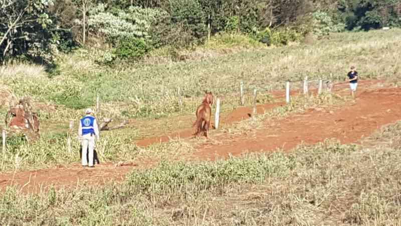Corpo de Bombeiros é mobilizado para resgate de cavalo em Cascavel, PR