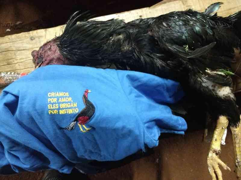 Polícia Ambiental resgata 53 galos usados em rinha e detém 36 pessoas, em Cascavel, PR