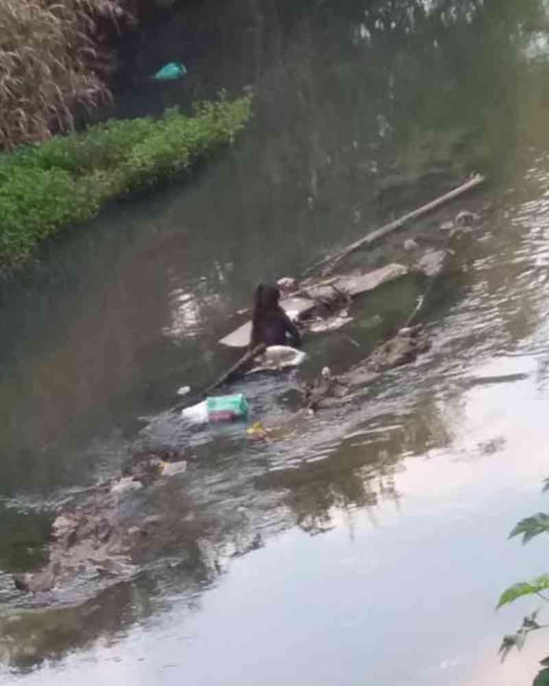 SPAC: 'Procura-se o covarde que jogou cão em um rio de Colombo'