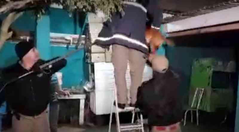 Bombeiros resgatam cadela de cima de telhado no Cajuru, em Curitiba, PR