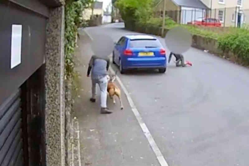 Adolescentes atiçam cão para matar gato