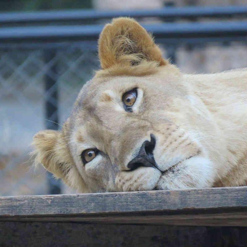 Piauí pode ter primeiro modelo de zoológico transitório no país