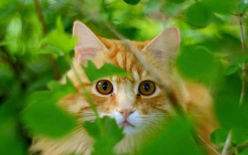Plano de classificar gatos sem microchip como pragas resulta em ameaças de morte na Nova Zelândia