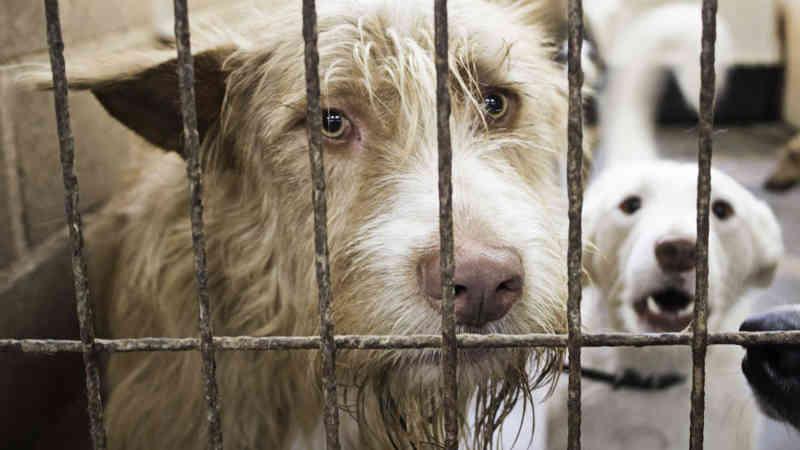 Portugal: Oeiras vê investimento em animais como política para 'eliminar problemas'