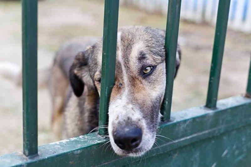 Mais de 3.500 pessoas assinam petição pelo cumprimento do fim dos abates em Portugal