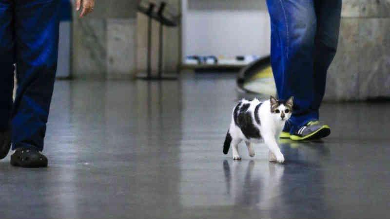 Após decisão da Justiça, gato Rubinho volta a circular por galeria de Copacabana, no Rio
