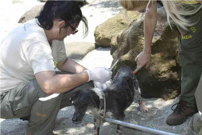 Veterinários na Estrada prepara nova expedição para a Ilha dos Gatos, no RJ