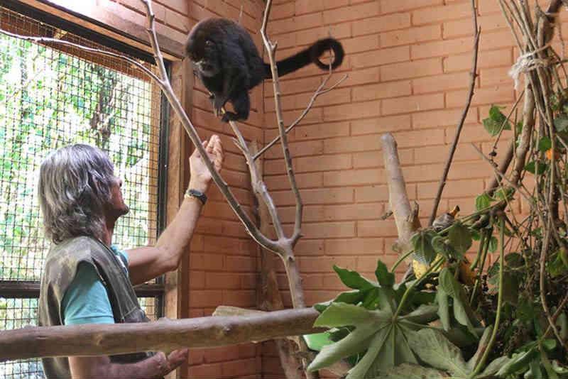 Bugio fêmea é devolvida à natureza nesta terça em Macaé, no RJ