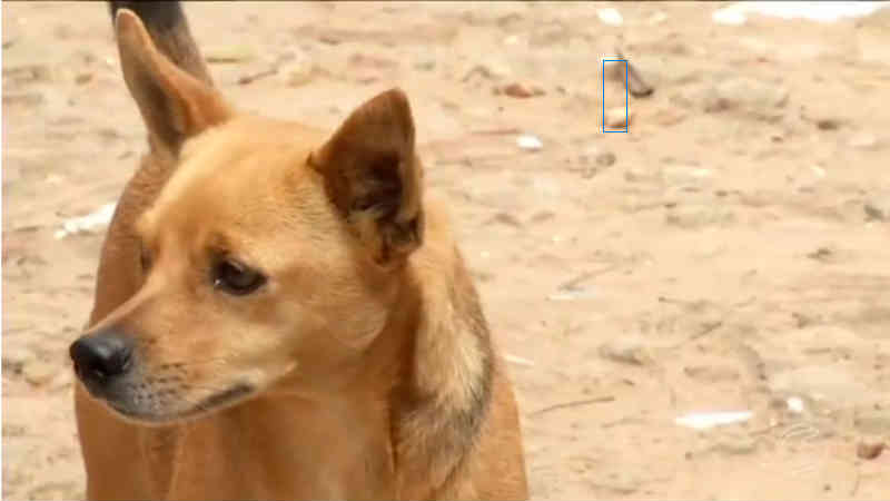 Vigilância da zoonose de Paracambi, RJ, intensifica castração de cães e gatos