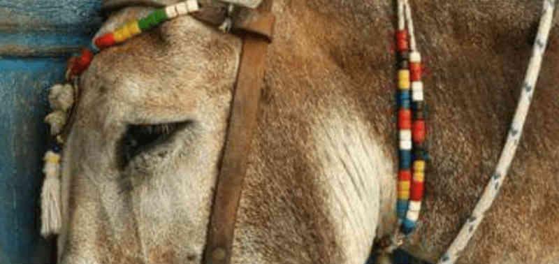 Vida e morte severina de um cavalo em Paraty, RJ