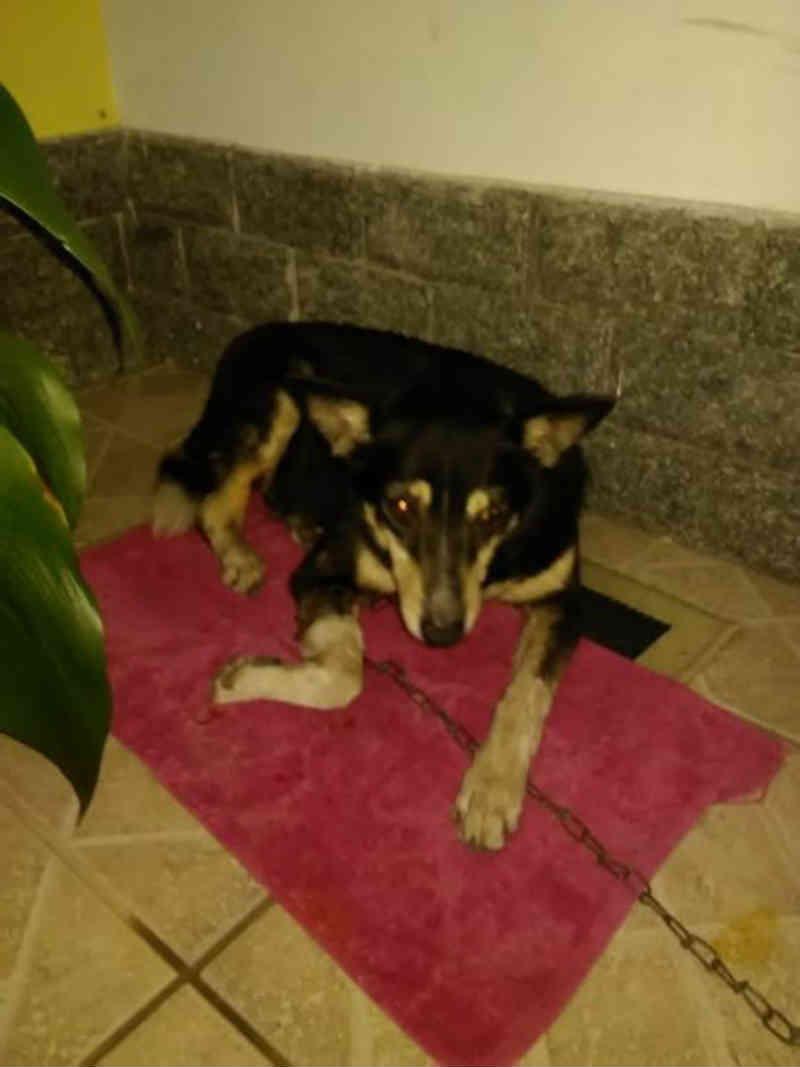 Casal encontra cachorra machucada na Ilha São João em Volta Redonda, RJ
