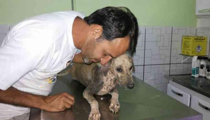 Belford Roxo (RJ) cadastra protetores de animais