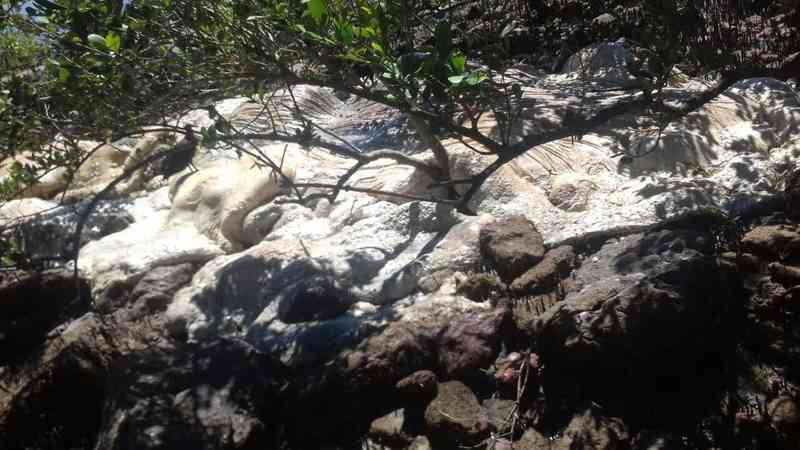 Baleia é encontrada em estado avançado de decomposição no Mangue de Pedras, em Búzios, no RJ