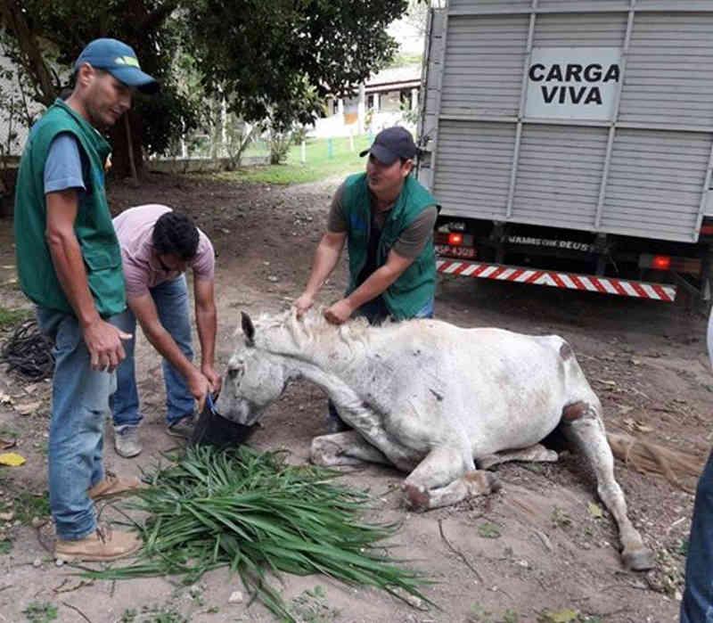 Égua abandonada que agonizava de dor em Rio das Ostras (RJ) é resgatada pelo PSA e tem quadro estável