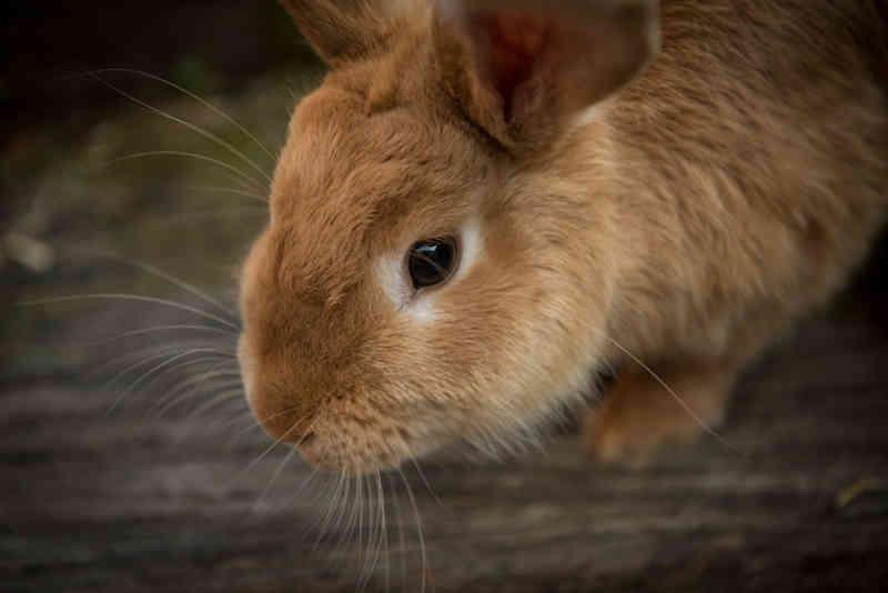 Empresas cosméticas tentam impedir proibição de testes em animais no Rio de Janeiro
