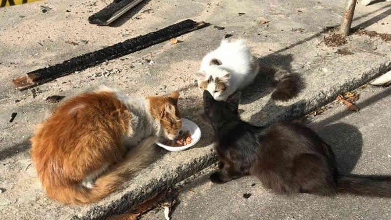 Mais de 20 gatos sobrevivem a incêndio no Museu Nacional