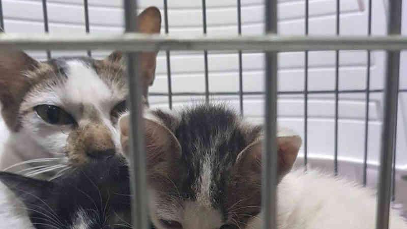 Protetores dos animais salvam gatos durante incêndio no Museu Nacional no Rio de Janeiro