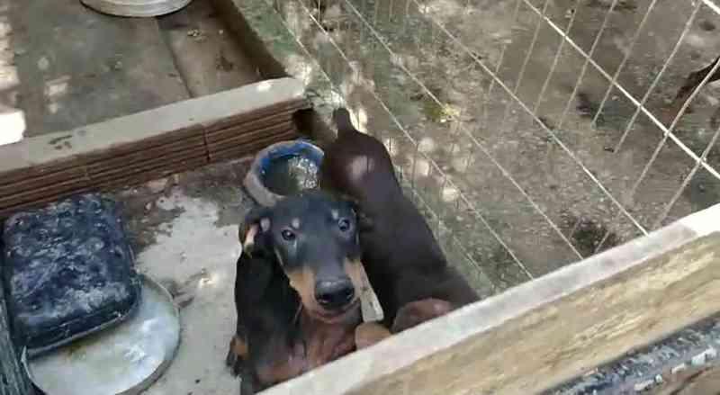 Policiais resgatam 43 animais que sofriam maus-tratos no RJ