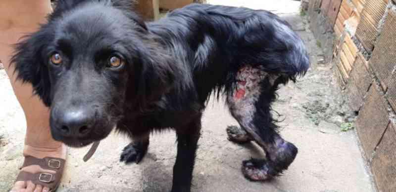 Protetores dos animais resgatam cachorro em casa abandonada em Volta Redonda, RJ