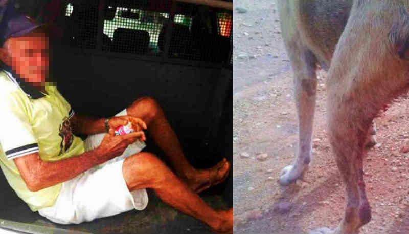 Senhor de 67 anos é preso acusado de estuprar cadelas em Janduís, RN
