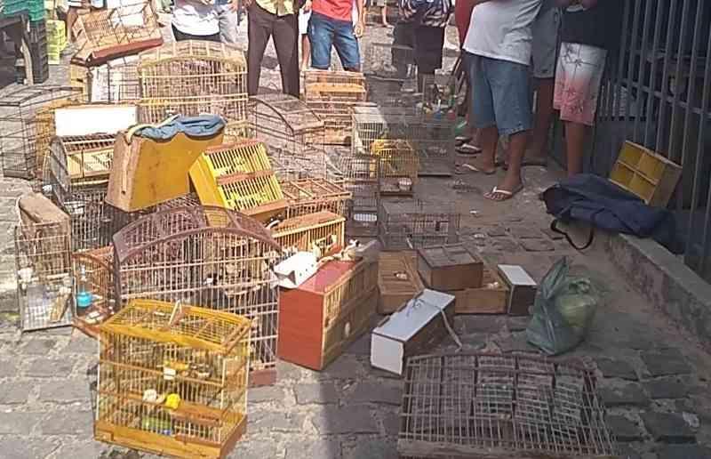 Operação conjunta apreende 300 aves silvestres e prende 4 pessoas em Parnamirim, RN