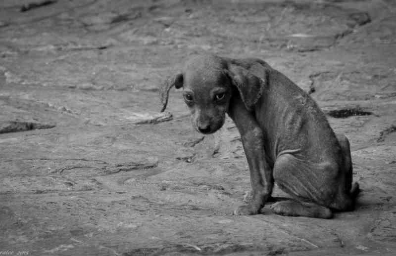 Polícia Civil apreende cão em situação de maus-tratos no Ouro Verde, em Camaquã, RS
