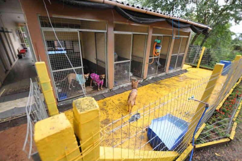 Tutores de animais encontrados na rua vão precisar pagar multa para resgatá-los, em Santa Cruz do Sul, RS