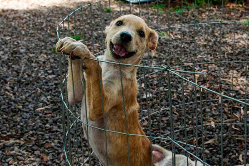 Carnês do IPTU de Santa Cruz do Sul (RS) vão incentivar a adoção de animais