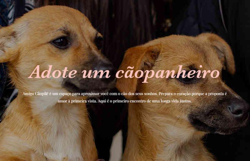 Jornalista cria site para auxiliar adoção de cachorros de rua em São Leopoldo, RS