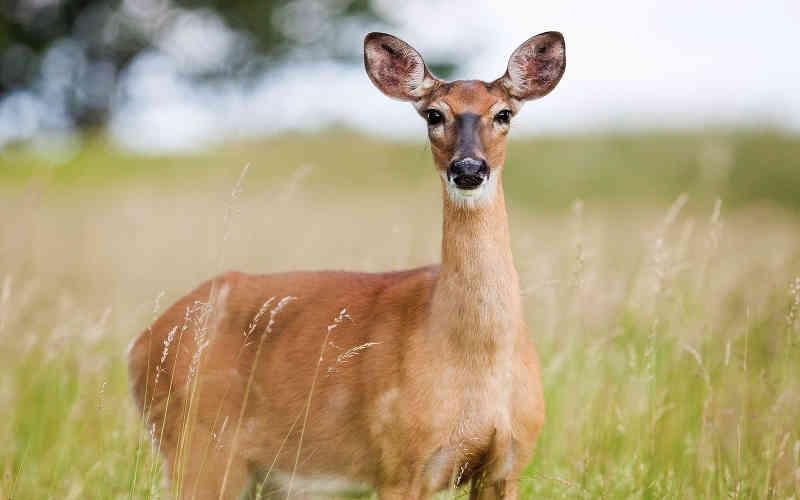 Reino Unido: Secretário quer permitir caça em 30 refúgios de vida selvagem - ajude a combater essa grande ameaça aos animais!