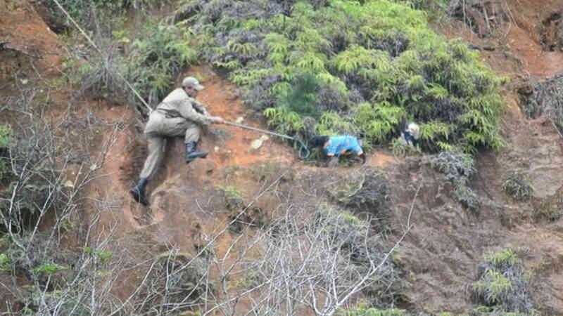 Dois cães são resgatados de penhasco em Balneário Camboriú, SC; VÍDEO