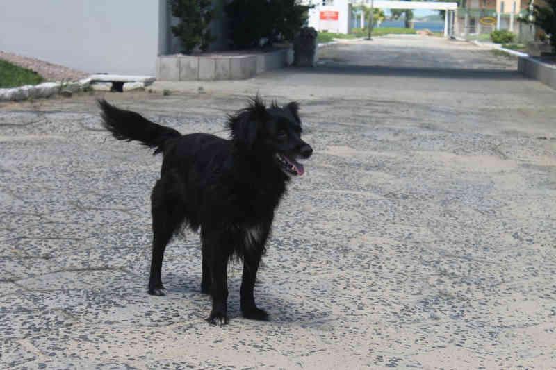 Casos de maus-tratos a animais gera suspeita de zoofilia em Balneário Rincão, SC