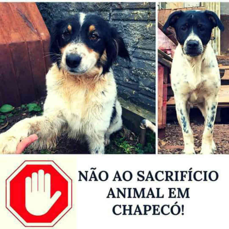Comissão da OAB Chapecó (SC) tratará sobre direitos dos animais