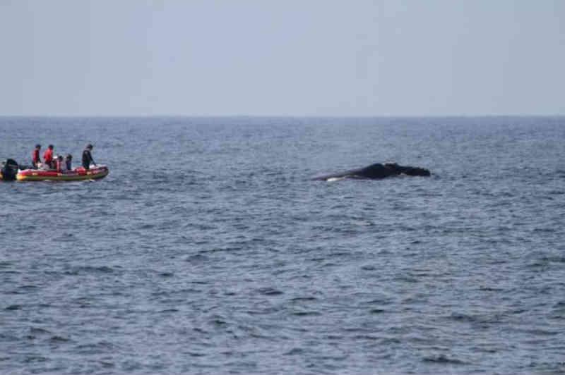 Pautada há 17 anos, criação de santuário para proteção de baleias é rejeitada novamente